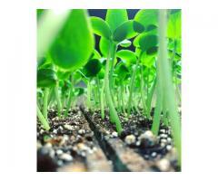 پرلیت کشاورزی
