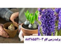 پرلیت و کاشت و پرورش پیاز سنبل perlite