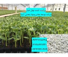 پرلیت برای کشاورزی و بوته خیار