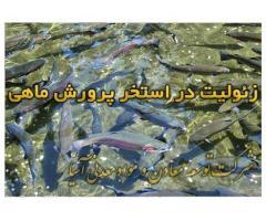 فروش زئولیت در بستر استخرپرورش ماهی