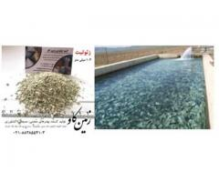 بررسی اثرات زئولیت بر خوراک میگو ها(Zeolite)