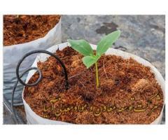 فروش ویژه کوکوپیت سریلانکایی