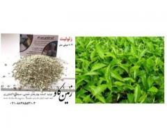 تاثیرات زئولیت در رشد گیاه (Zeolite)