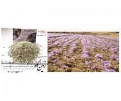 زئولیت در مرغوبیت محصولات کشاورزی Zeolite