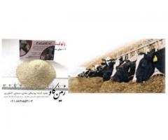 عملکرد زئولیت در برابر آفلاتوکسین ها (Zeolite)