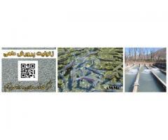 سنگ زئولیت zeolite در استخر پرورش ماهی