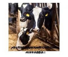 فروش اکسید منیزیم ویژه خوراک دام- معدن کاوان