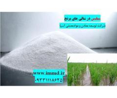 سیلیس مورد استفاده در شالیزار برنج