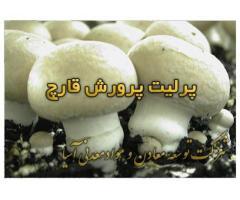 فروش پرلیت جهت پرورش قارچ