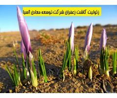 زئولیت معدنی جهت کاشت زعفران
