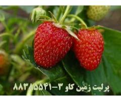مزیت های استفاده از پرلیت به عنوان بستر کشت در پرورش توت فرنگی