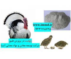 فروش زئولیت در خوراک و بستر پرندگان