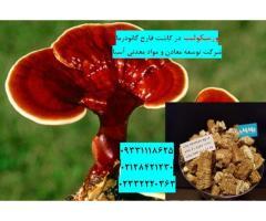 فروش ورمیکولیت در بسترکشت قارچ گانودرما