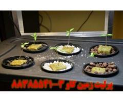 پرلیت و رشد و تکثیر گیاهان Perlite