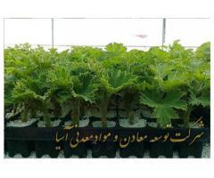 خواص پرلیت در کشاورزی